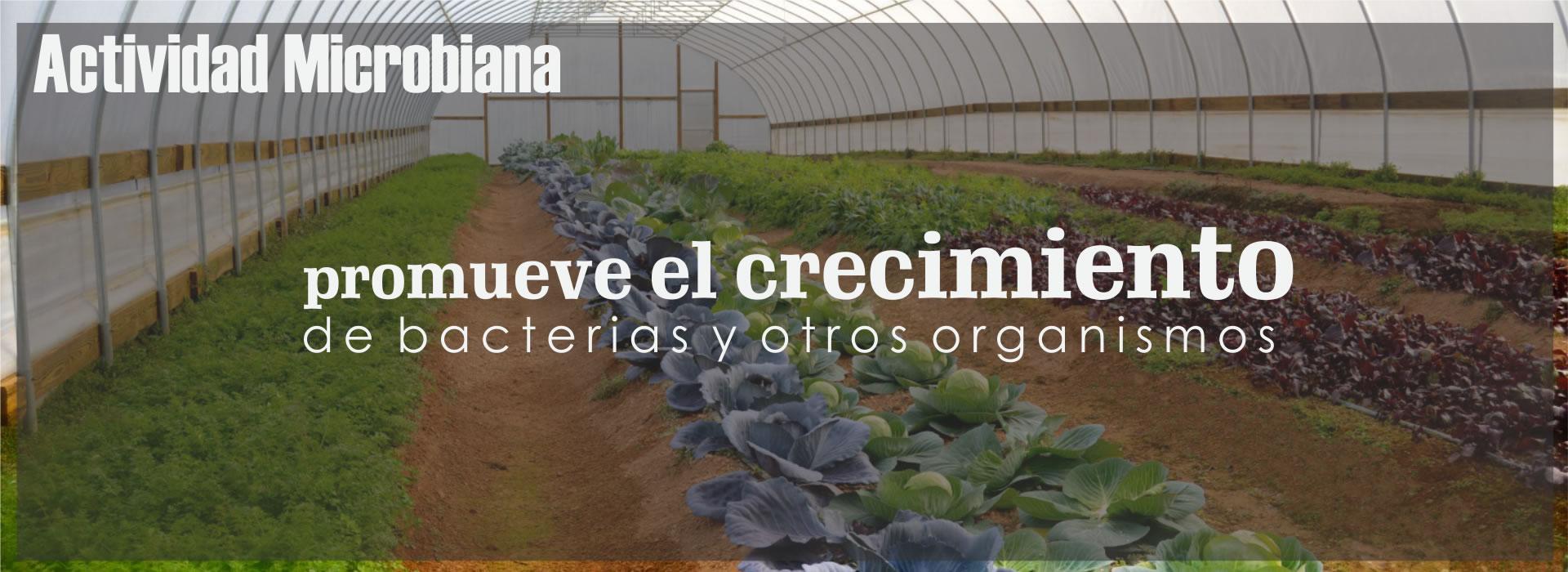 Promueve el crecimiento de bacterias y otros organismos