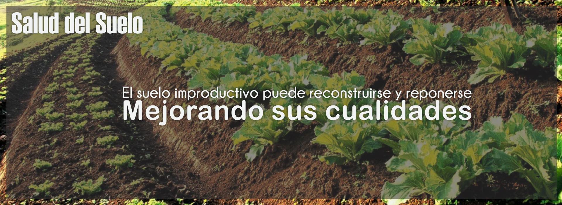 El suelo improductivo puede reconstruirse y reponerse, mejorando sus cualidades